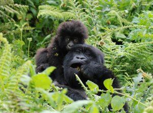 Gorilla Trekking Adventure